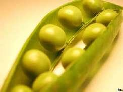 Zöldségek képekben